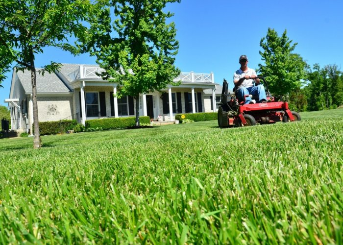 Lawn Care, Snow Removal, Landscaping, Tree Triming